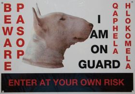 Beware Of The Dog Sign - Bull Terrier