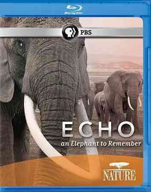 Nature:Echo Elephant to Remember - (Region A Import Blu-ray Disc)