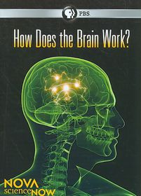 Nova:Sciencenow How Does the Brain Wo - (Region 1 Import DVD)