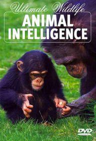Ultimate Wildlife:Animal Intelligence - (Region 1 Import DVD)